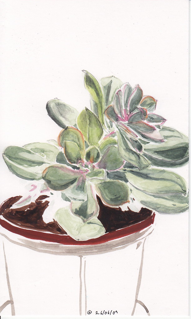 How To Draw Succulent Plants