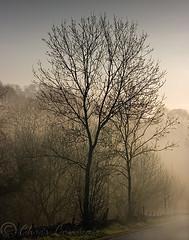 Morning Mist. (Digital Diary........) Tags: morning trees mist sunrise landscape derbyshire peakdistrict chrisconway