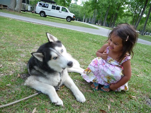 Ava meeting our neighbor's husky, Blaze.