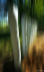 Posts (.Brian Kerr Photography.) Tags: light shadow gardens canon landscape scotland movement secret posts icm dumfries galloway holywood charlesjencks portrack portrackhouse eos5dmkii briankerrphotography
