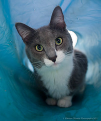 Cat in a Tube (Nelson Charette Photo) Tags: teens scratchingpost