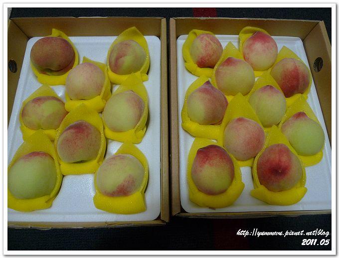 新社華豐農場甜蜜桃 (8)
