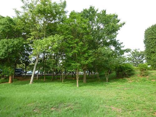 taichung-metropolitan-park-20