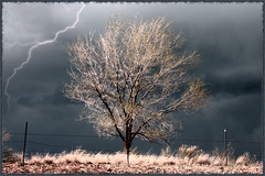 rumbling sky and cold wind (Outrageous Images) Tags: wild storm tree weather electric fence ominous photoshopped stormy adventure barbedwire lightning wilderness darksky blueribbonwinner theunforgettablepictures outrageousimages davewadsworth goldenheartaward