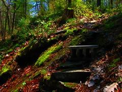 IMG_6075ps.JPG (Loops666) Tags: trees stairs forest moss woods rocks cinderblock