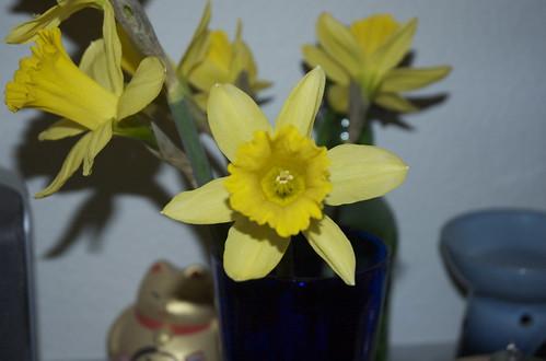 spring sitcks 09