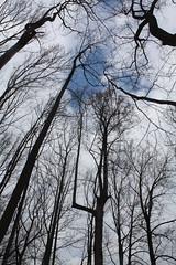 Looking up #4 / early spring (ellen  x silverberg) Tags: lookingup silverspring earlyspring valleymill
