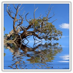 Reflections (Lars Kehrel) Tags: blue sky brown reflection tree green water reflections landscape wasser flood himmel samsung s lars grn braun blau landschaft baum reflektion quadrat quadratisch 1050 flut reflektionen s1050 kehrel quasratic
