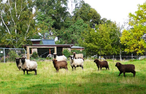 Neighbours of the Nierinna Creek Walking Track