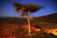 tree at night in the desert (jonstraveladventures) Tags: africa longexposure night morocco ns1