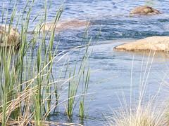 DSCF2099 (phil_sidenstricker) Tags: nature water landscape aqua naturallight donotcopy fujifilmfinepixs5700 vftw florenceazusa daarklands
