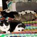 4 Cats on a Bed