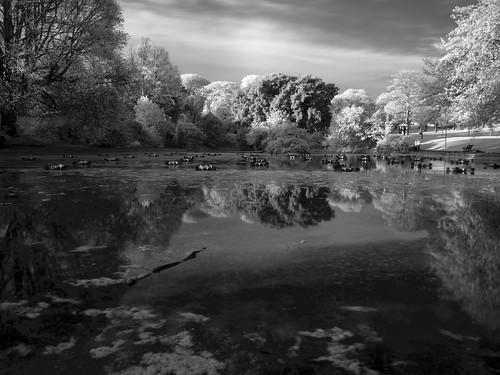 Queen's Park Pond