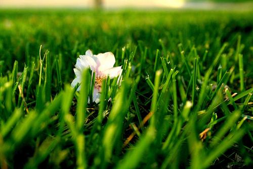 jinx!'s flickr