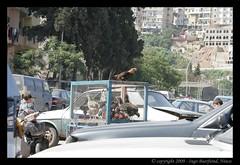 2009-05-10 09-36-20_copy (ibuerfei) Tags: travel lebanon castle urlaub tripoli 2009 souq crusaders liban rundreise libanon couchsurfing neareast kreuzritter tripolis naherosten