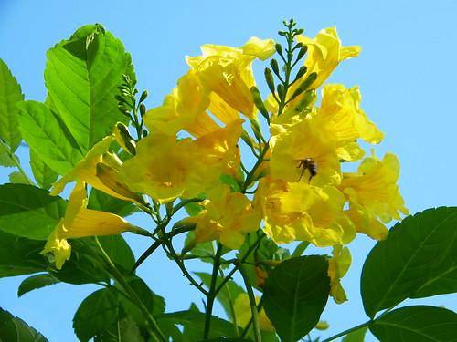 Bee in Esperanza