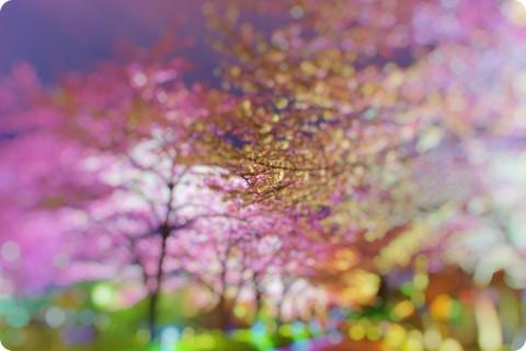 Sakura Heaven