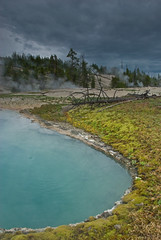 Evening - A One Hour Walk in Yellowstone - #1 (Dave Renwald) Tags: evening yellowstone hotpools deadtrees thermalfeature