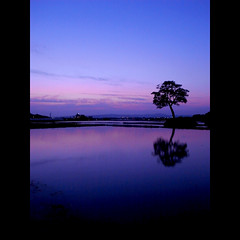 June/07/2009 (shotam) Tags: pink blue sky reflection field silhouette evening snap 365 ricoh 2009 asuka magichour grd asukavillage asukamura  62365 grd2     grdbook
