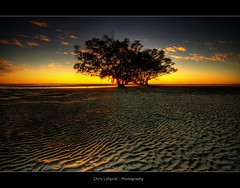 My Tree (Christolakis) Tags: tree sunrise ripples soe hdr sigma1020 nudgeebeach canon400d paramangroup
