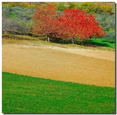 Out of season (Nespyxel) Tags: autumn trees nature colors autunno renoir nespyxel stefanoscarselli pleasedontusethisimageonwebsites blogsorothermediawithoutmyexplicitpermissionallrightsreserved