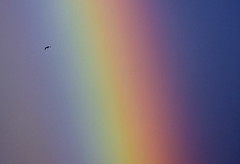 Freedom (Jokull) Tags: blue red sky green bird colors yellow island freedom flying photo iceland rainbow photograph fugl ísland icelandic rautt himinn gult blátt litir jokull grænt frelsi canoneos40d traveltoiceland cometoiceland