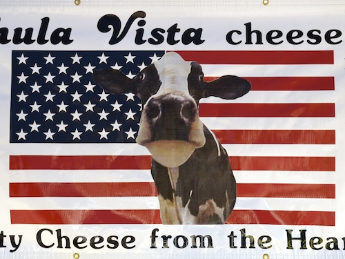 Fourth of July Cheese Cow