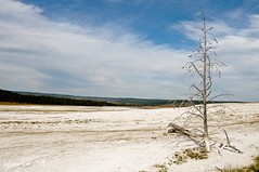 STANDING ALONE (bydamanti) Tags: trees landscapes yellowstonenationalpark yellowstone wyoming gmt lowergeyserbasin americaamerica fountainpaintpottrail heavenearth royalgroup landscapedreams oneearthonehome colorsoftheheart qualitypixels greatpicturesoflandscapes comefromlandandsea tuigol yellowstonevalleysandviews