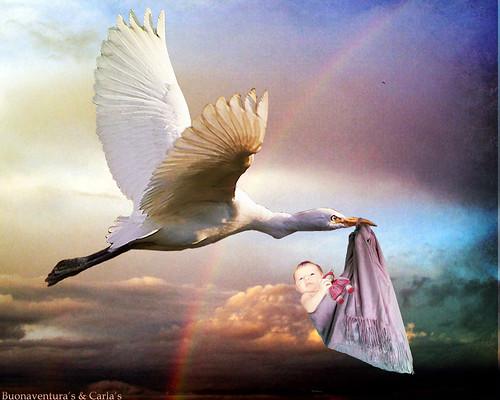 Airone bianco come cicogna - White heron like stork