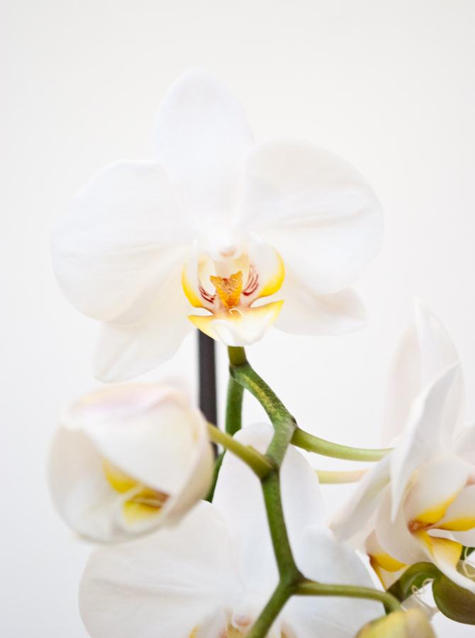 Lovely flowers  DSC_2814