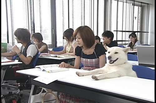 kaikun otoosan dog book