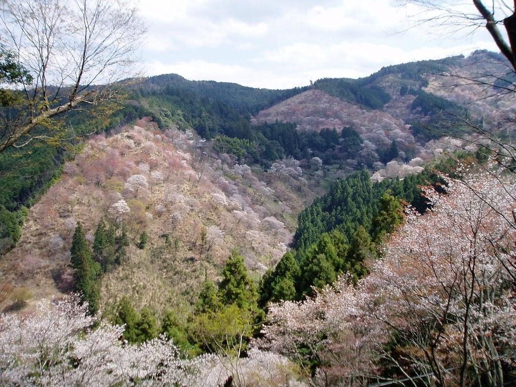 吉水神社の入り口から見る一目千本