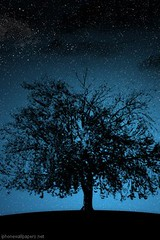 Dark tree forest iphone wallpaper download 320x480