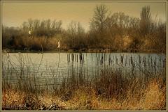 L'étang...