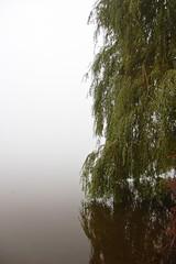 DSC_1565 (mdpayne) Tags: fall boston ma picis october2007