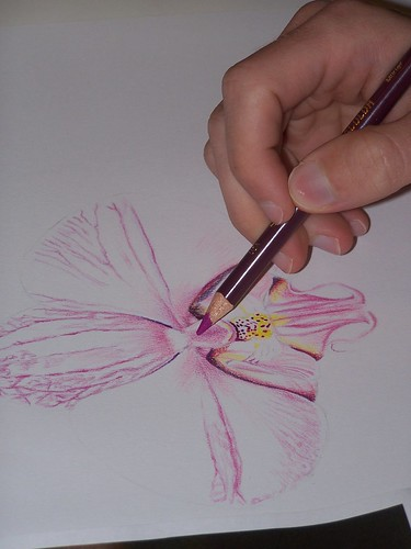 orchid colored pencil 3