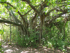 Birch Park (tchamber236) Tags: vacation florida weston vacationvillage