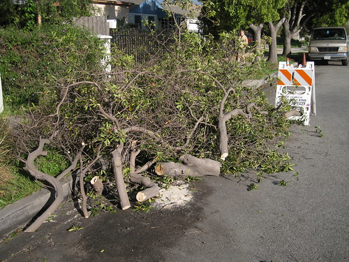 wind-felled tree in LA