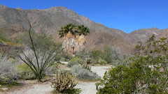 Borrego Springs (Jim Mullhaupt) Tags: california wallpaper cactus mountains rock spring palmcanyon borregosprings desertwildflowers mullhaupt jimmullhaupt