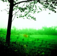 tHiNK LikE a tREe (27147) Tags: flower tree 120 film grass fog zeiss mediumformat t thailand cross hasselblad explore mae 28 process 80 pai 500cm zippa sippanont hongson fbdg 27147 inetrestingness