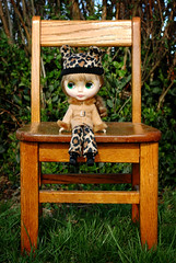 Leopard on a Chair