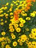 Pure Nature V (Imran Khan - Always Pakistan First) Tags: pakistan flower nature beauty interesting alone great streetphotography attractive marinamall salmiya sialkot subhanallah imrankhan aplusphoto purenatural zeeimran neikapura