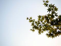 _寓言。 (eliot.) Tags: life live hsinchu taiwan eliot happytogether 淡淡三月天 theunforgettablepictures goldstaraward 北方小鎮