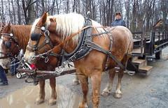 horses & cart