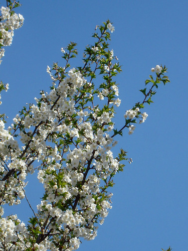 Frühlingsblust
