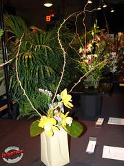 Ikebana (fotoproze) Tags: canada orchids quebec montreal ikebana orchidee orqudeas 2009 orchideje orchides anggrek orchideen   orkide hoalan storczyki orchideen  orhidee  orkideer orqudies orkideat brnugrs orhideje  orkider orkideak orchidey  photobylisegross  orchidexpo2009 orchids  orchidek magairln  tegeirianau