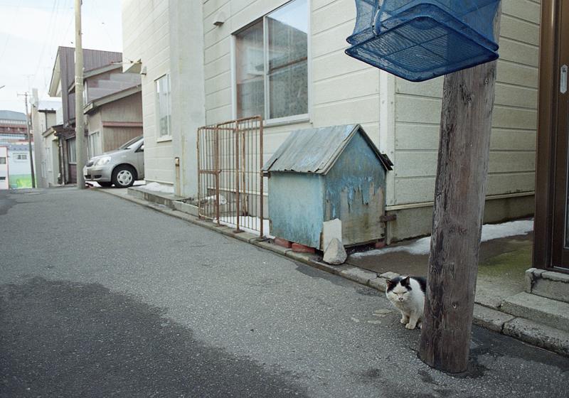 干し網と猫