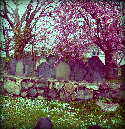 cherry blossoms cemetery