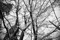 (Holga-Jen) Tags: street trees winter blackandwhite bw white snow ontario black cold london film 35mm december kodak branches toycamera plastic vivitar vignette bw400cn vivitarultrawideandslim vuws