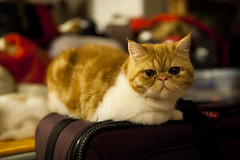 Kitty..on my luggage